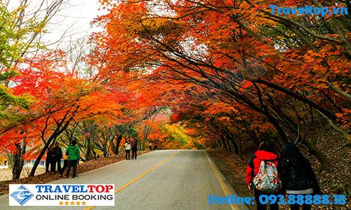 Du lịch Hàn Quốc vào tháng mấy