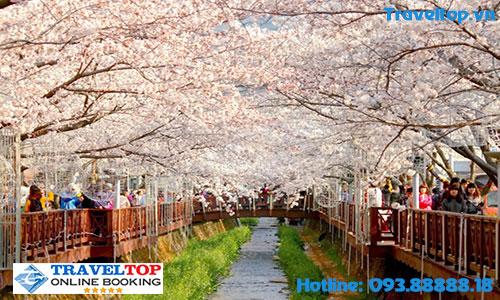 Du lịch Hàn Quốc vào thời gian mùa nào đẹp nhất trong năm