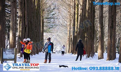 Có nên du lịch Hàn Quốc vào mùa đông